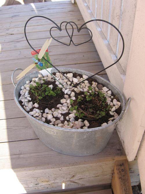 Mint in a pot